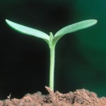 Erde, Boden, Land, Pflanze